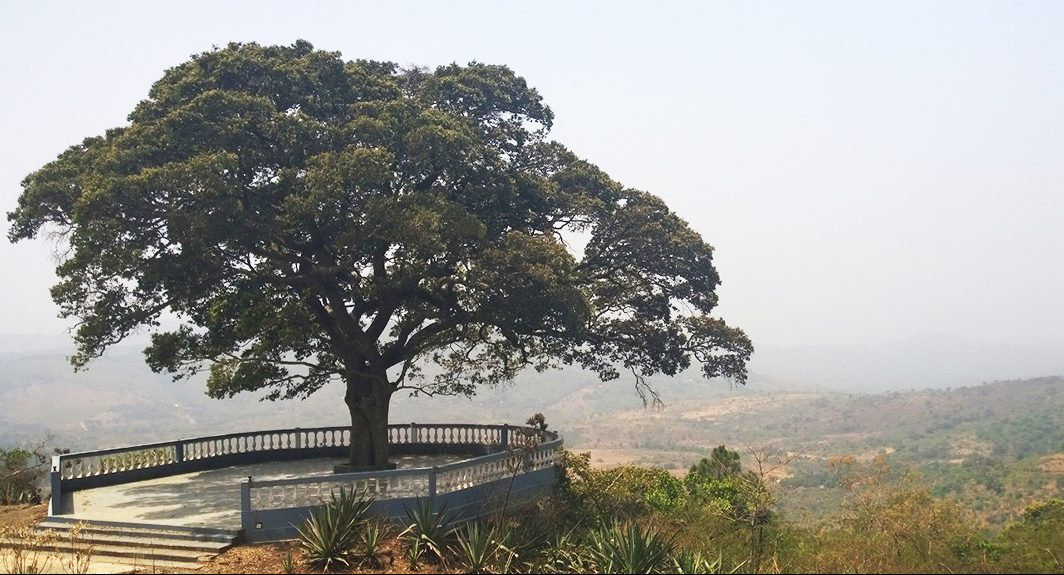 A tree in Guinea