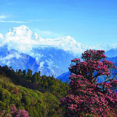 Notecard_Himalayan splendour_front