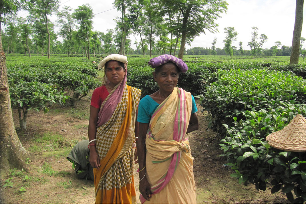 Two female tea pickers in Bangladesh