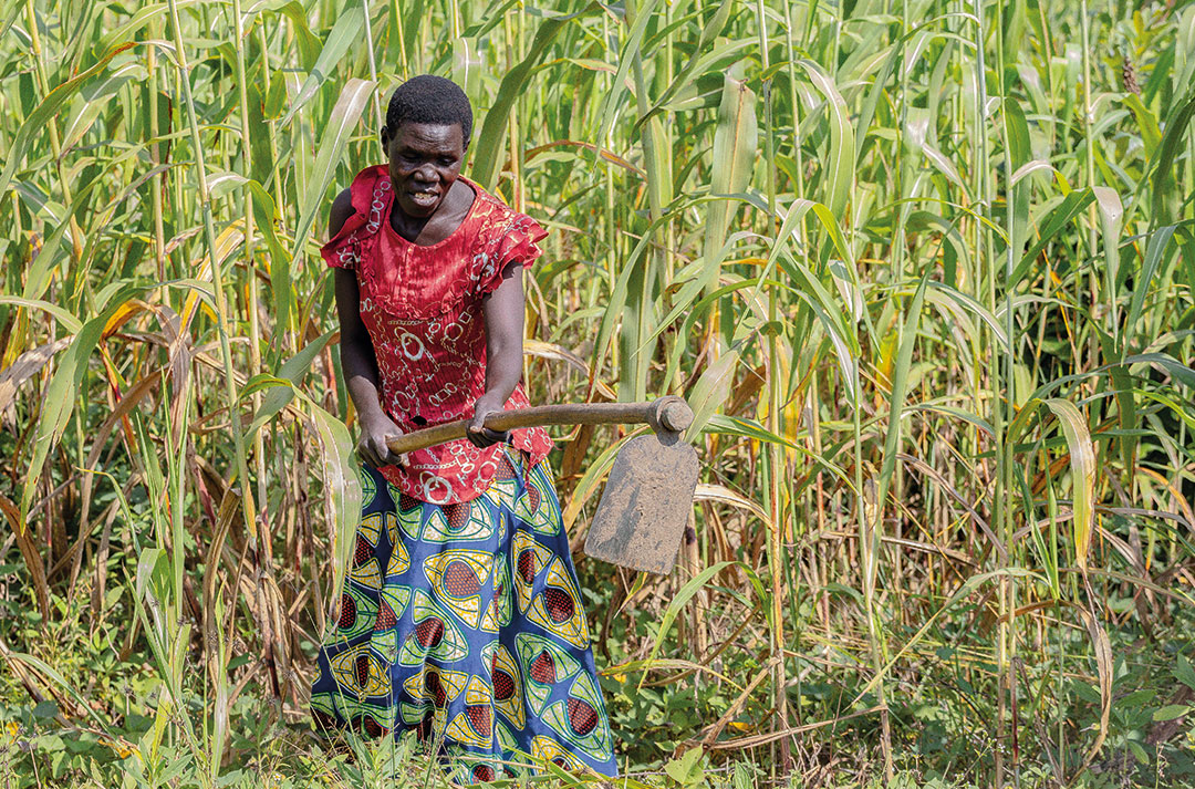 This conflict survivor is using one of the tools to work a crop of maize