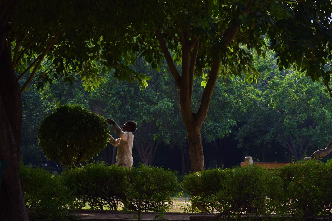 A man tending to a bush in a park in India, next to a tree and a bench.