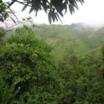 Greenery - Mizoram